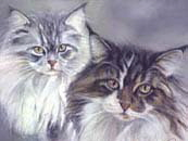 2maincoon