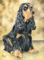 Cocker_Spaniel_F2_Oel_2014