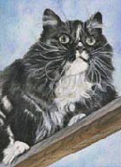 Main-Coon-sw-Aquarell-24-x-